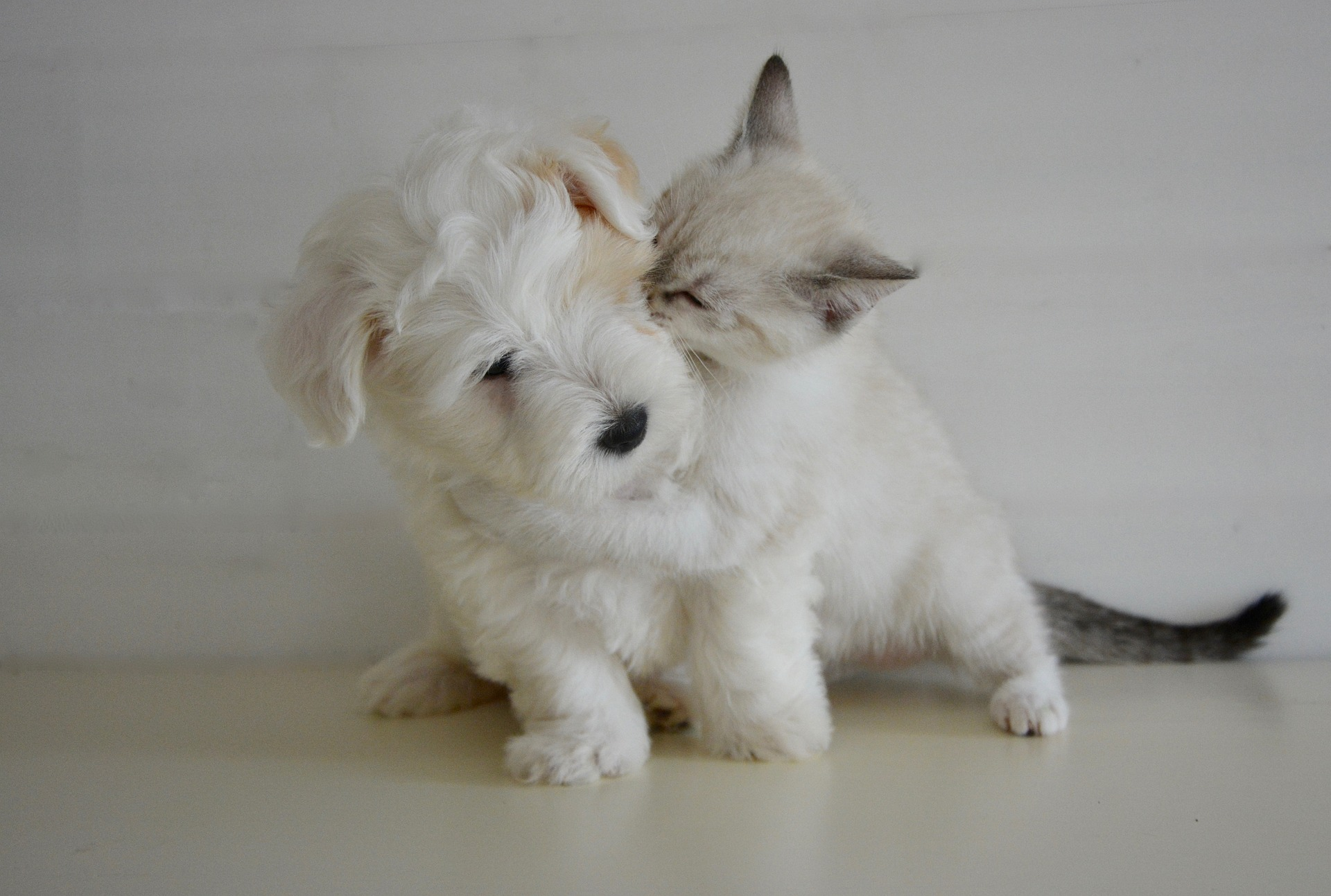 dog baby teeth - puppy and kitten hugging