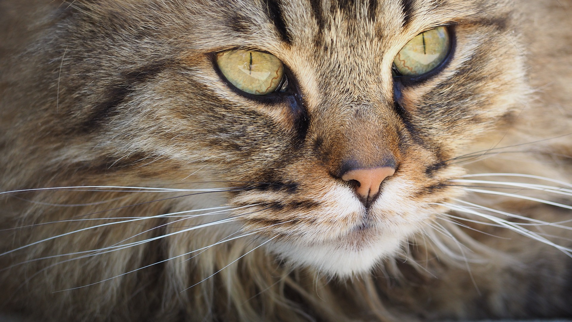 Tooth Resorption in Cats